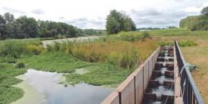 A fishway located on a DUC project in the Annapolis Valley of Nova Scotia.