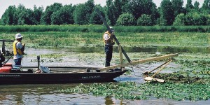 After determining manual harvesting would not successfully eradicate water chestnut in Quebec's South River, experiments to develop more efficient methods were undertaken, including this prototype of the first light-harvesting machine.