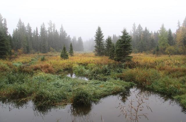 Boreal wetland, in mist.