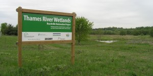 The Thames River Wetland Restoration Project, a 285-acre project, has undergone significant changes over the last few years.