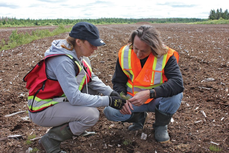 Pascal Badiou (r), DUC research scientist, and Line Rochefort, NSERC Industrial Research Chair on Peatland Management, examine vegetation in a retired peatland in southeastern Manitoba. ©DUC/Peter McCartney