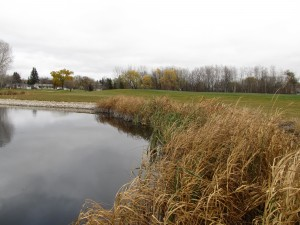 Since staff at Native Plant Solutions naturalized a pond at Rossmere Golf and Country Club, golf course superintendent Greg Mitchell has noticed more waterfowl and wildlife. ©Native Plant Solutions