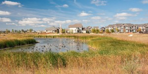 Naturalized wetland in Winnipeg, built with the expertise of people like Gord MacKay of Native Plant Solutions. ©DUC/Tye Gregg