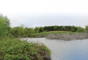 A wetland at Onandaga Farms. The Hendersons' relationship with DUC began in 1978, when the Hendersons partnered with DUC to implement five wetland restoration projects. This was followed by 20 additional projects in 1990, and three more in 1997. These wetlands range from a half-acre to 25 acres in size, and represent some of the best waterfowl habitat in Ontario.