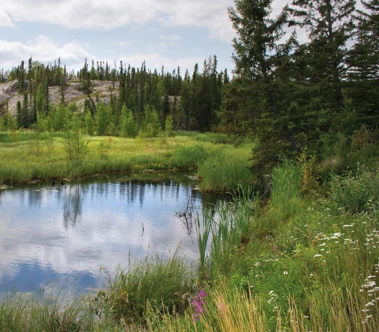 A boreal wetland